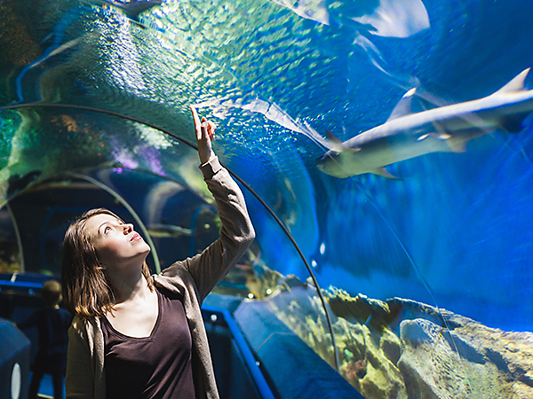 Bolton-Aquarium-City-Attraction
